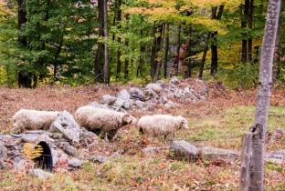 Oh em gee... sheeps.